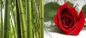 mawar-dan-bambu-300x133